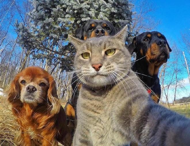 animal-selfie-inmarathi