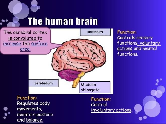 brain-coordination-inmarathi