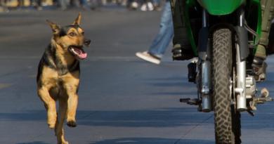 dog featured inmarathu