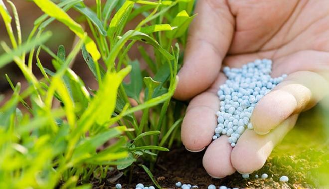 fertilizer-inmarathi
