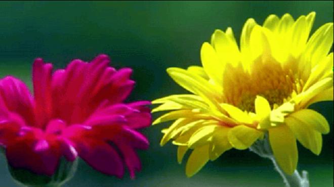 flowers inmarathi