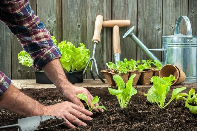 gardening-inmarathi