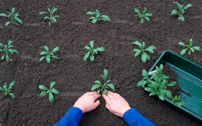 gardening1-inmarathi