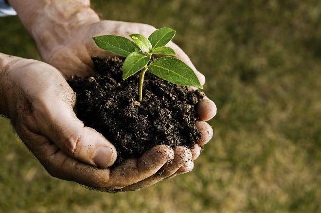handling-a-plant-inmarathi