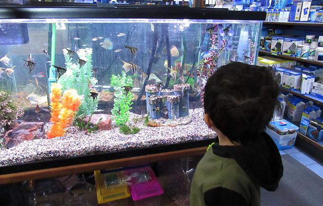 kids aquarium inmarathi