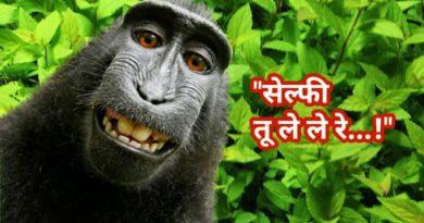 monkey-selfie-featured-inmarathi