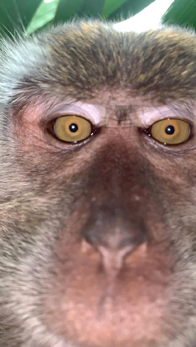 selfie-by-monkey-inmarathi