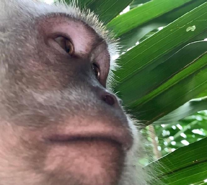 selfie-by-monkey2-inmarathi