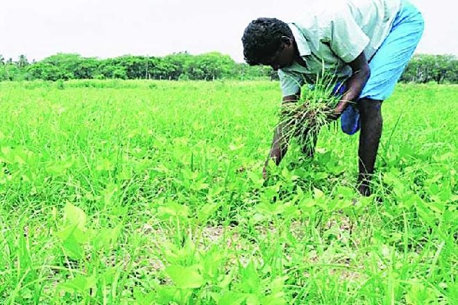 waste-plant-removal-inmarathi