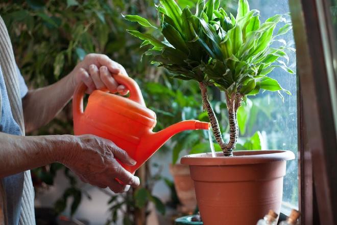 watering-a-plant-inmarathi