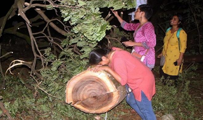 aare forest inmarathi