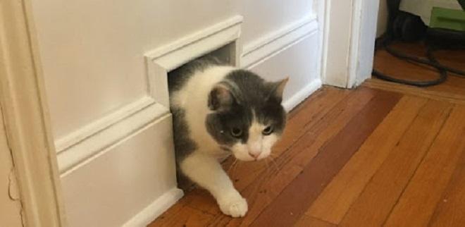 cat hole inmarathi