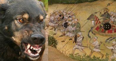 mughals-vs-dog-inmarathi