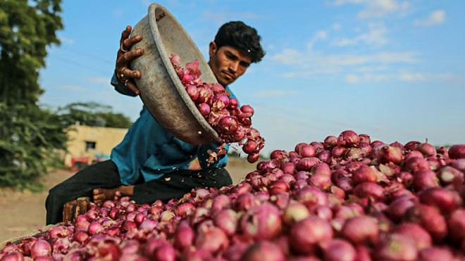 onion farmers inmarathi