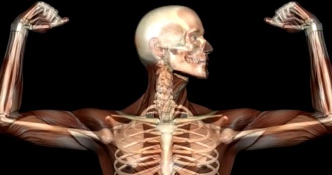 bones inmarathi