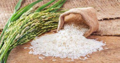 rice inmarathi