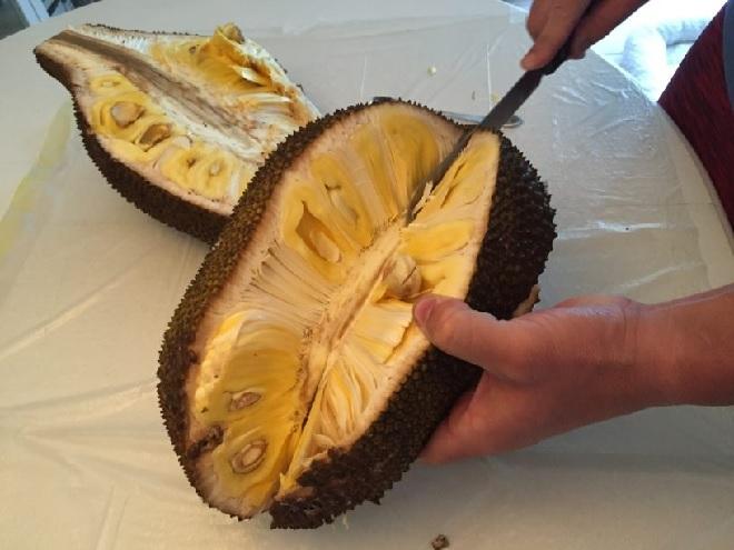 jackfruit cutting inmarathi