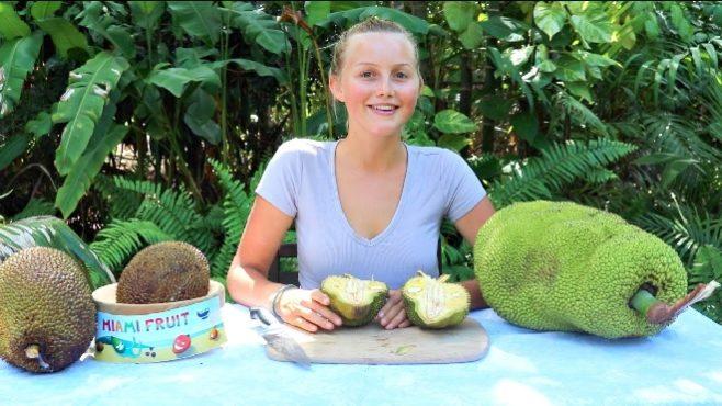 jackfruit in usa inmarathi