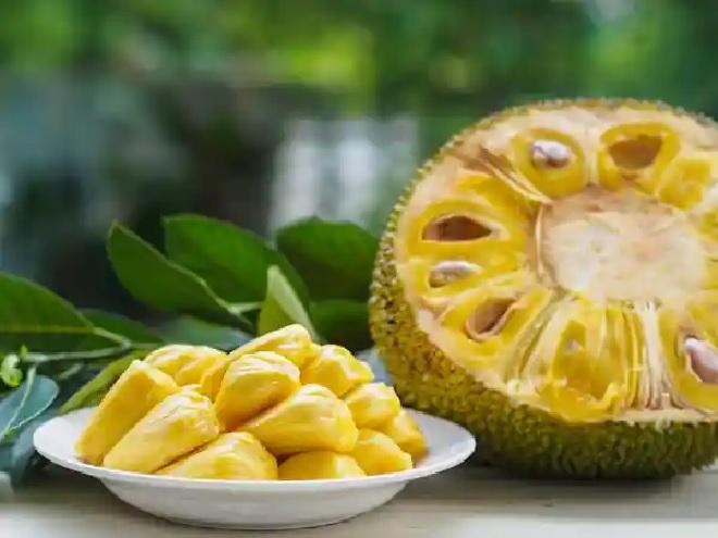 jackfruit inmarathi