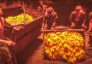 भारतात सोन्याचा धूर निघायचा, तो 'मिनी इंग्लंड' मानल्या जाणाऱ्या या खाणीतून!