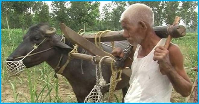 the bull inmarathi