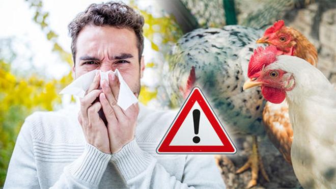 bird flu 3 inmarathi
