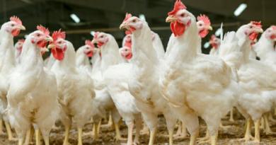 chicken featured inmarathi