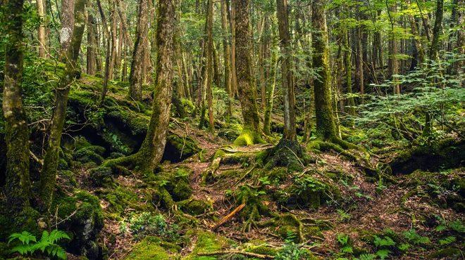 forest inmarathi