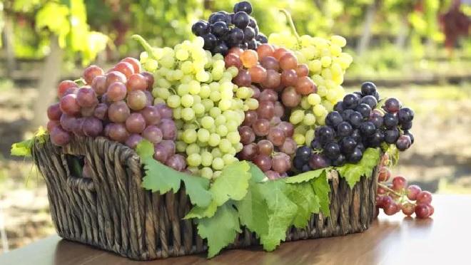 grapes basket inmarathi