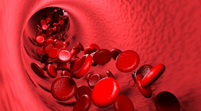 platelets inmarathi