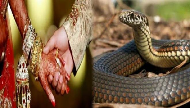 snake dowry inmarathi