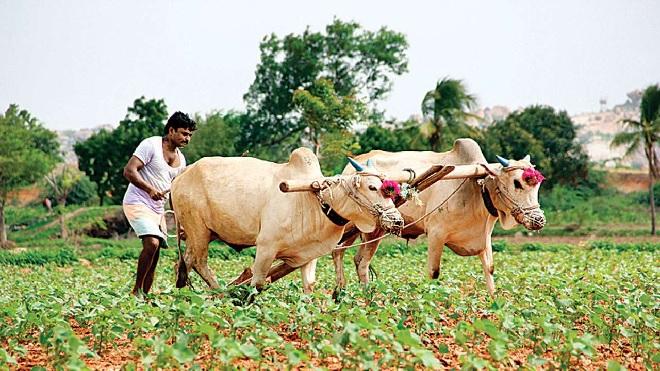 farmer working inmarathi