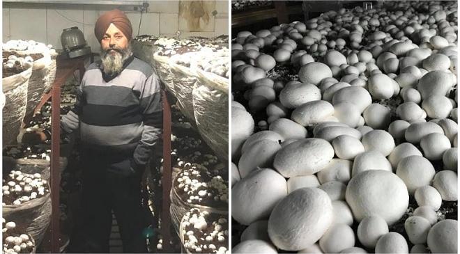 mushroom king inmarathi