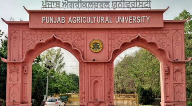 punjab agricultural university inmarathi