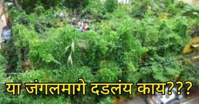 1700 trees jungle on roof top inmarathi