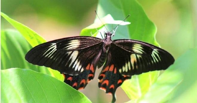 butterfly in nataraja upadhyay garden inmarathi