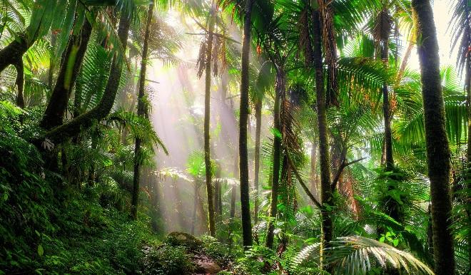 jungle inmarathi