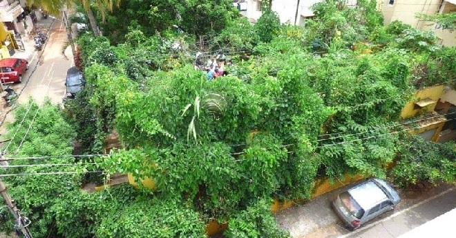nataraja upadhyay 1700 trees jungle inmarathi