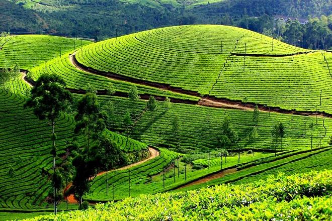 tata tea garden inmarathi