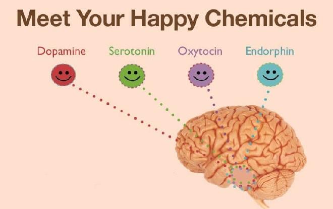 happy hormones inmarathi