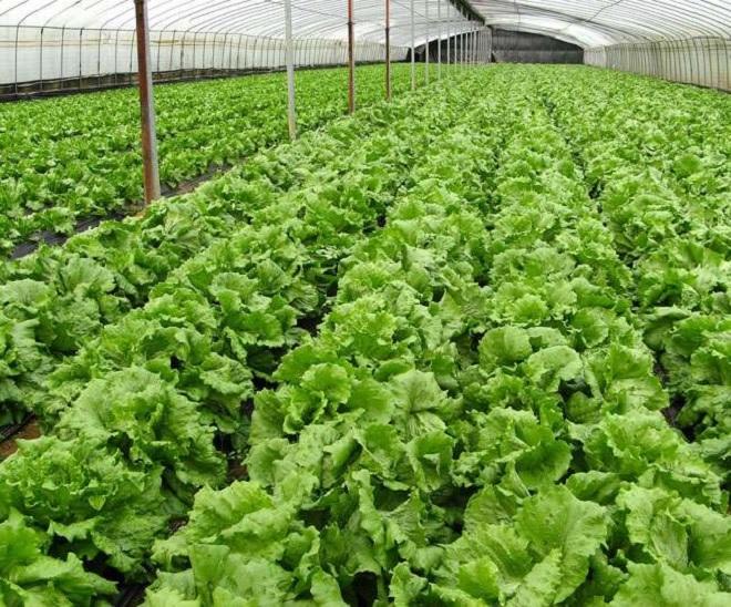 organic farming inmarathi