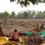 आदिवासींना रोजगारासाठी मिळतोय 'वनौषधांचा' आर्थिक आधार