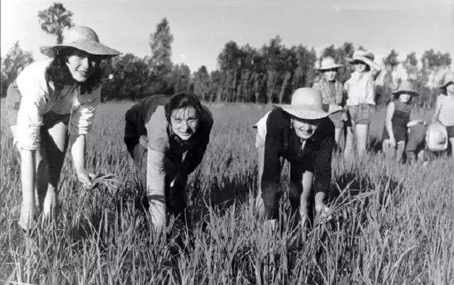 bella ciao farmers inmarathi