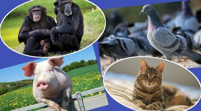 animal collage inmarathi