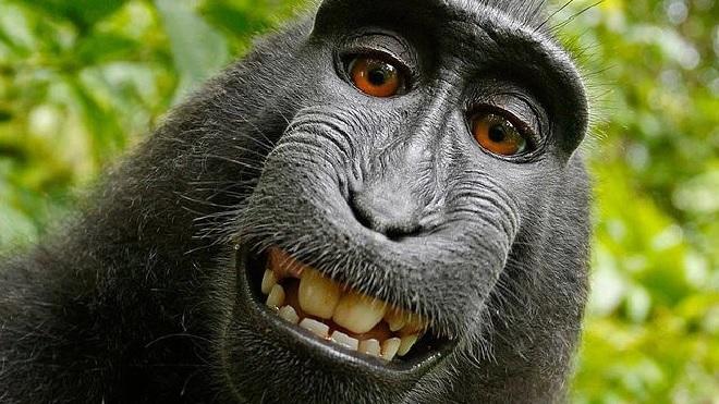 monkey inmarathi