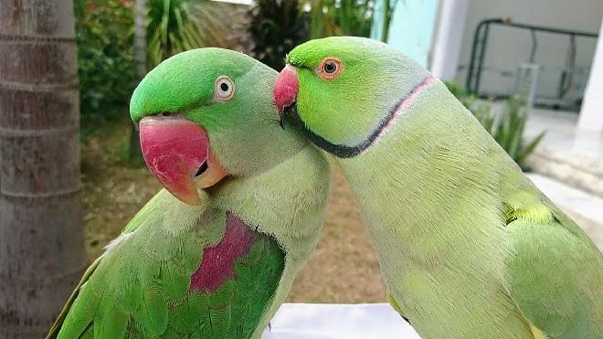 parrots inmarathi