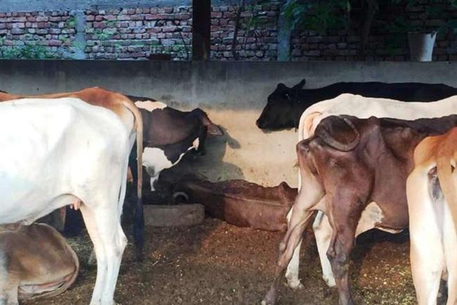 chara inmarathi 2
